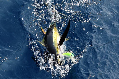 西沙海钓——三亚深海钓项目